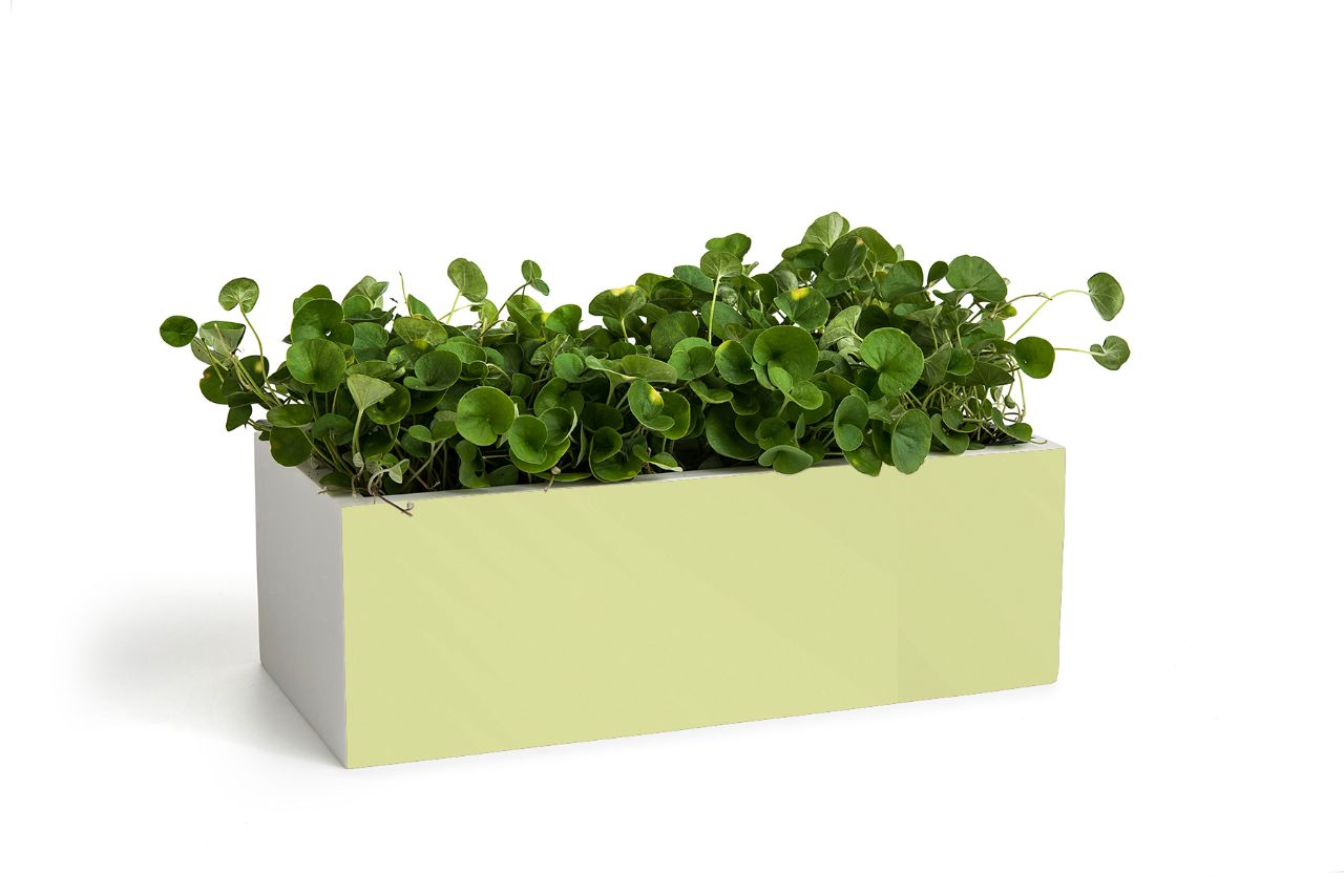 אגרטל מלבני מקוריאן ירוק