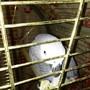 Гостинично-развлекательный комплекс Зеленый попугай