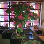 Ресторан Сакура
