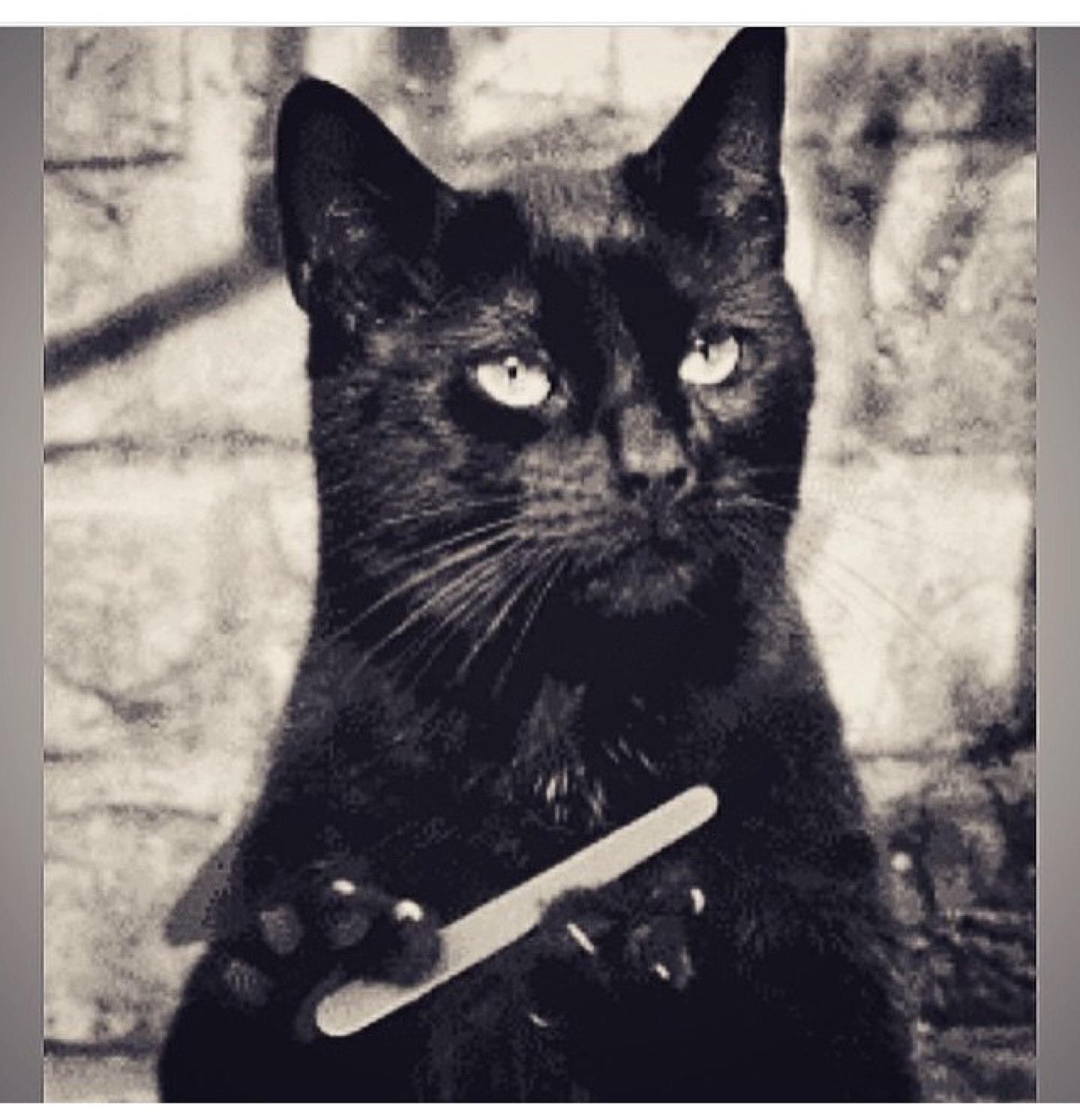 гифка черная кошка пилит ногти как это