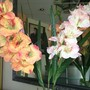 фото Салон красоты Ланеш 1