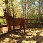Клуб любителей лошадей Вольный ветер