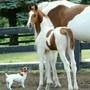 Конноспортивный клуб Белая лошадь