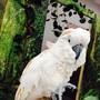 Контактный зоопарк на Тушинской