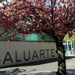 Imagen de Baluarte. Palacio de congresos y Auditorio de Pamplona