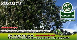 Marmara Alokrais Tarım