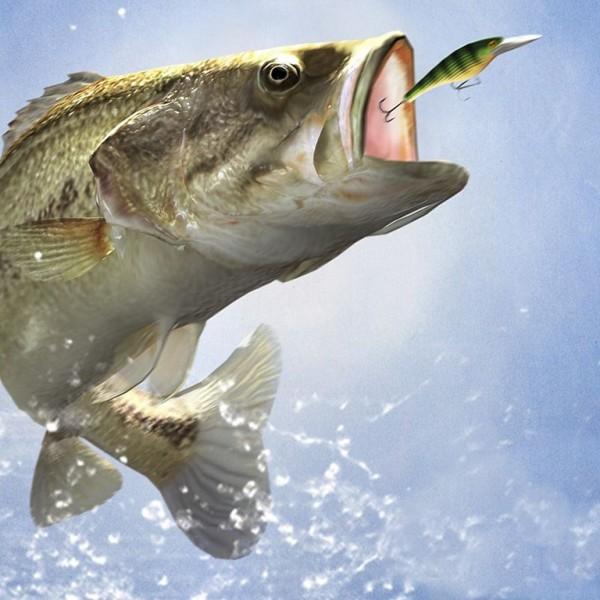 Balık Avı Ve Malzemelerinde Bolu Da Bolca Seçenek Sizleri Bekliyor