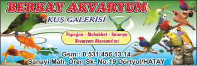 Berkay Akvaryum