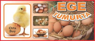 Ege Yumurta