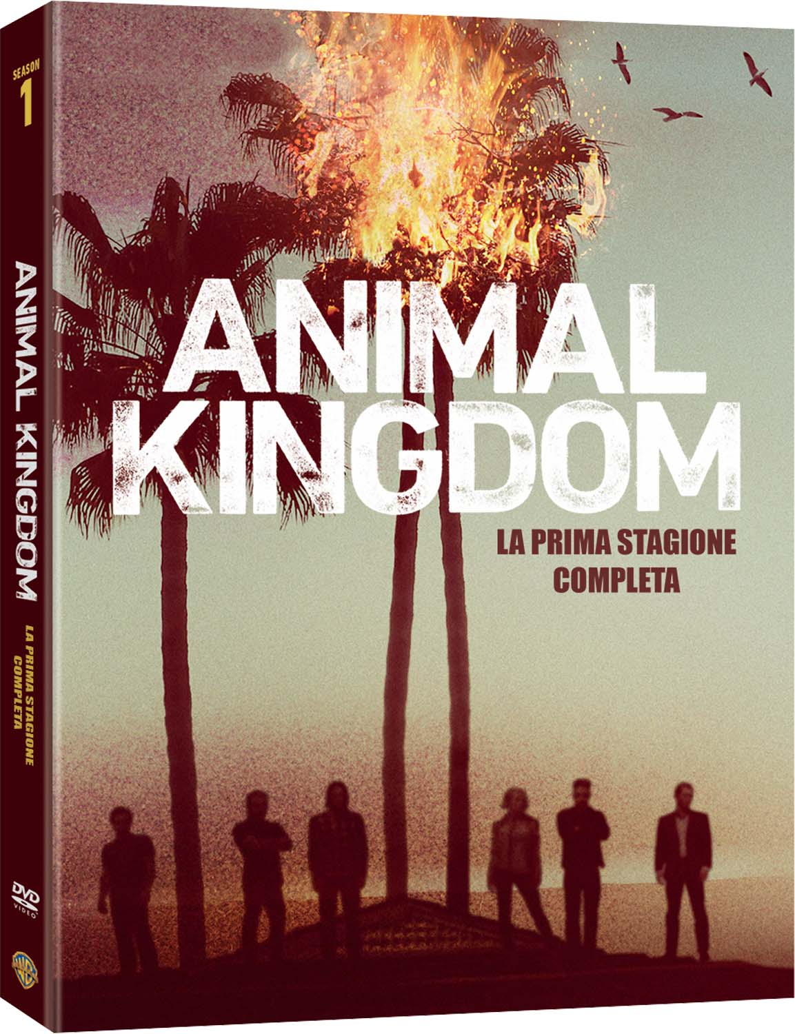 COF.ANIMAL KINGDOM - STAGIONE 01 (3 DVD) (DVD)