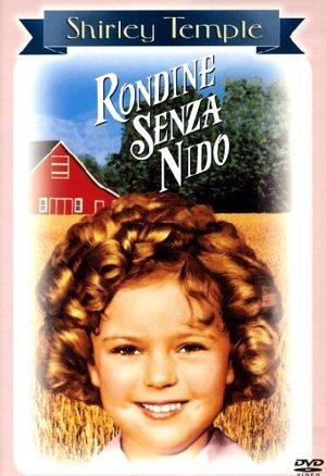 RONDINE SENZA NIDO (DVD)