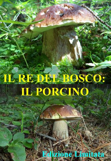 IL RE DEL BOSCO - IL PORCINO (DVD)