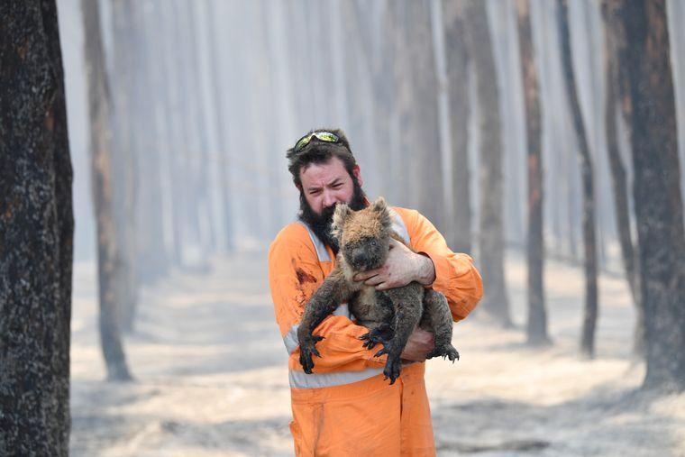 Пекельні пожежі в Австралії