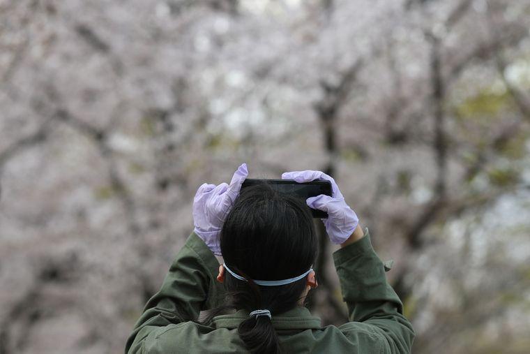 Правительство страны ввело программу, которая отслеживает людей, которые, вероятно, могли инфицироваться коронавирусом. Данные собирают, в частности, из геолокации мобильного телефона. На фото — женщина фотографирует смартфоном цветение сакуры в городе Тэгу, Южная Корея, 29 марта 2020
