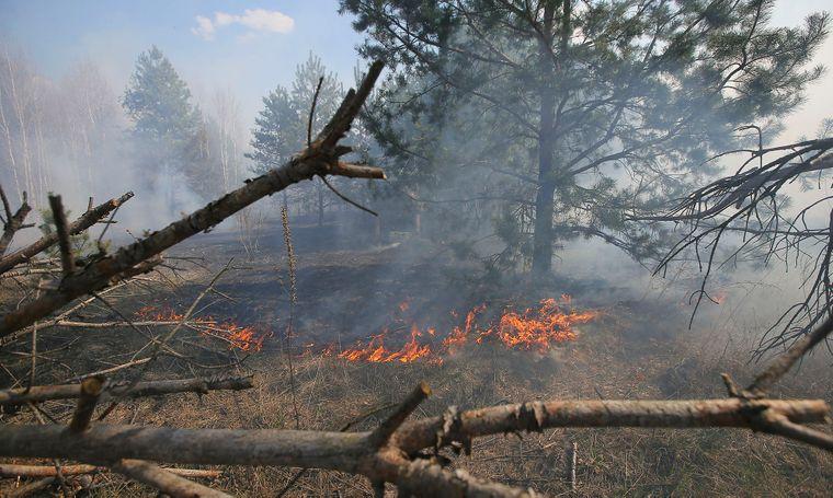 Лесной пожар на зоне отчуждения вблизи Чернобыльской АЭС, Украина, 10 апреля 2020