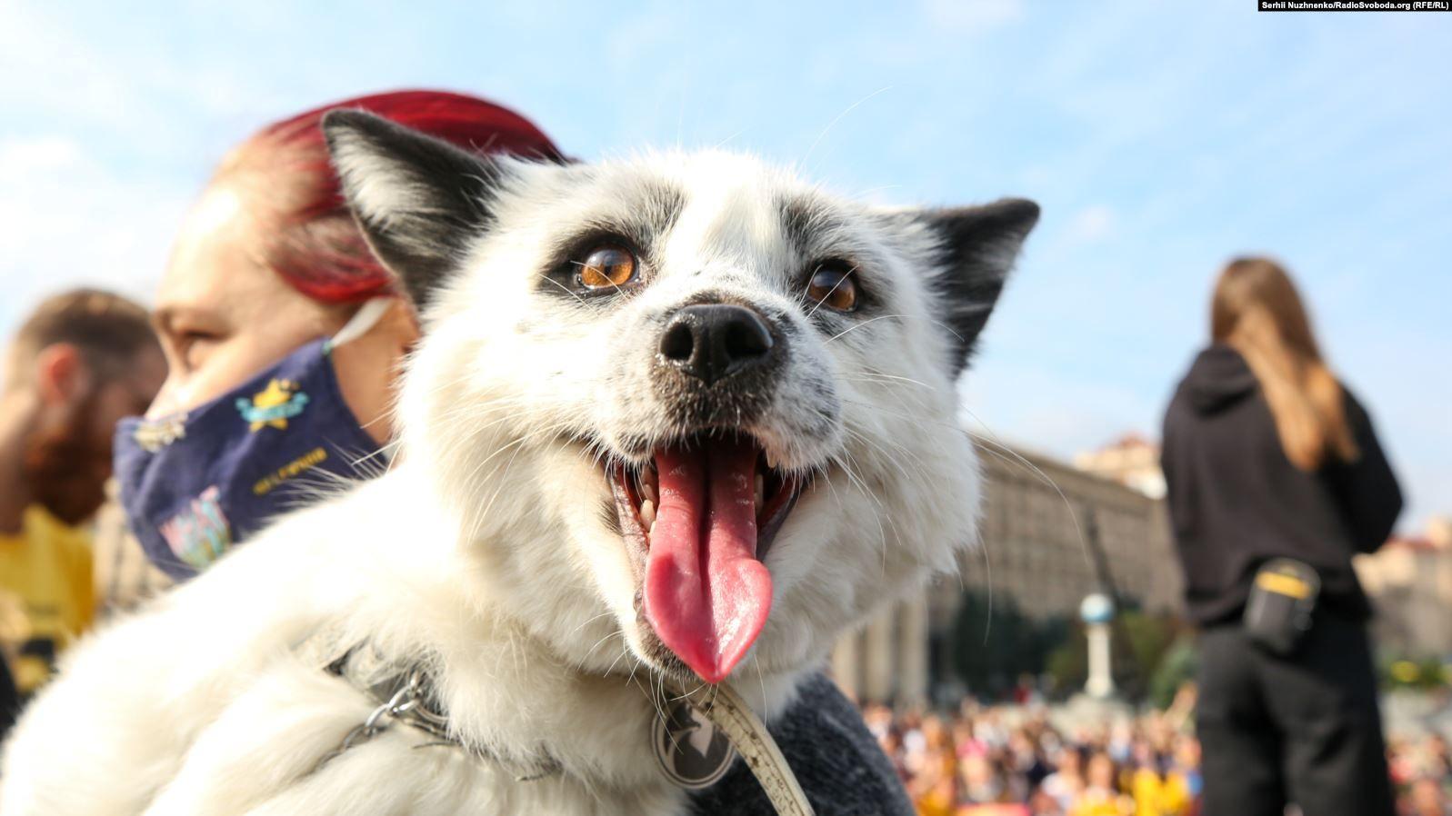 У Києві пройшла акція на захист тварин. Зооактивісти вимагають заборонити  хутряні ферми та використання тварин у цирках | Громадське телебачення