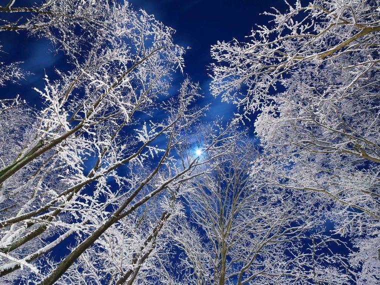 «Місячне світло у зимовому лісі». Сендай, Японія