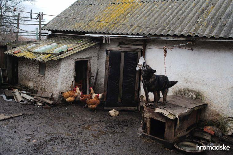 Собака і кури на подвір'ї Володимира Олексійовича