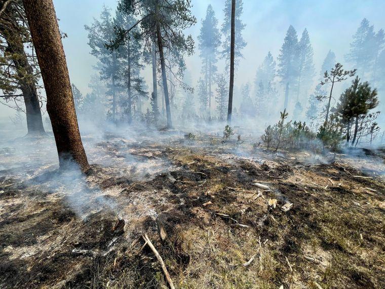 Наслідки масштабних лісових пожеж у США