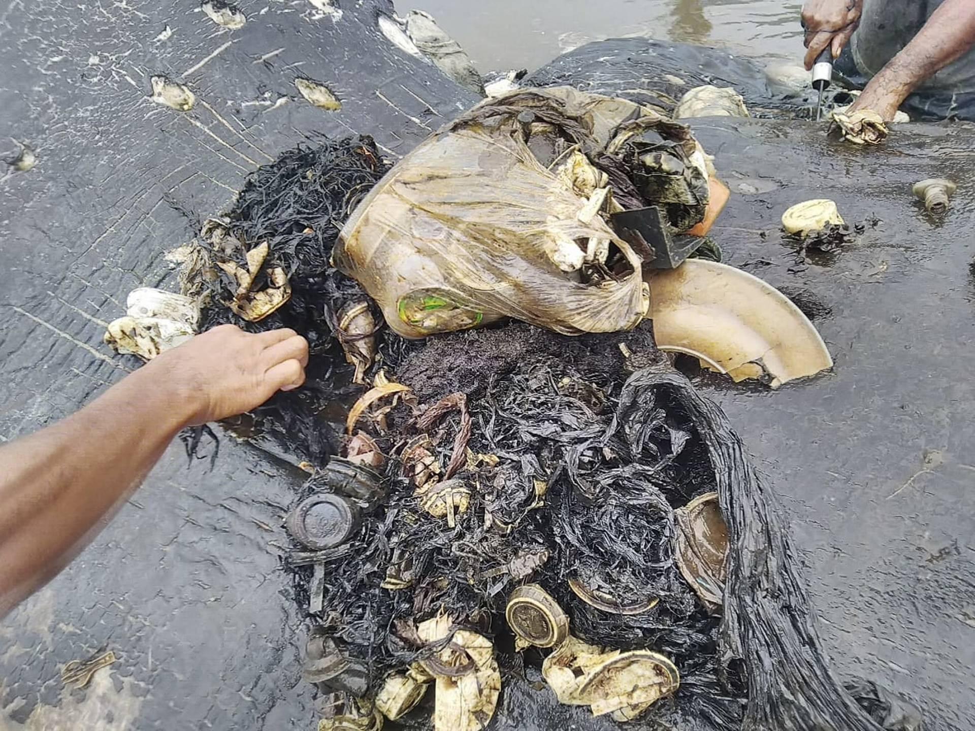 В Індонезії у шлунку мертвого кита знайшли майже 6 кг пластику