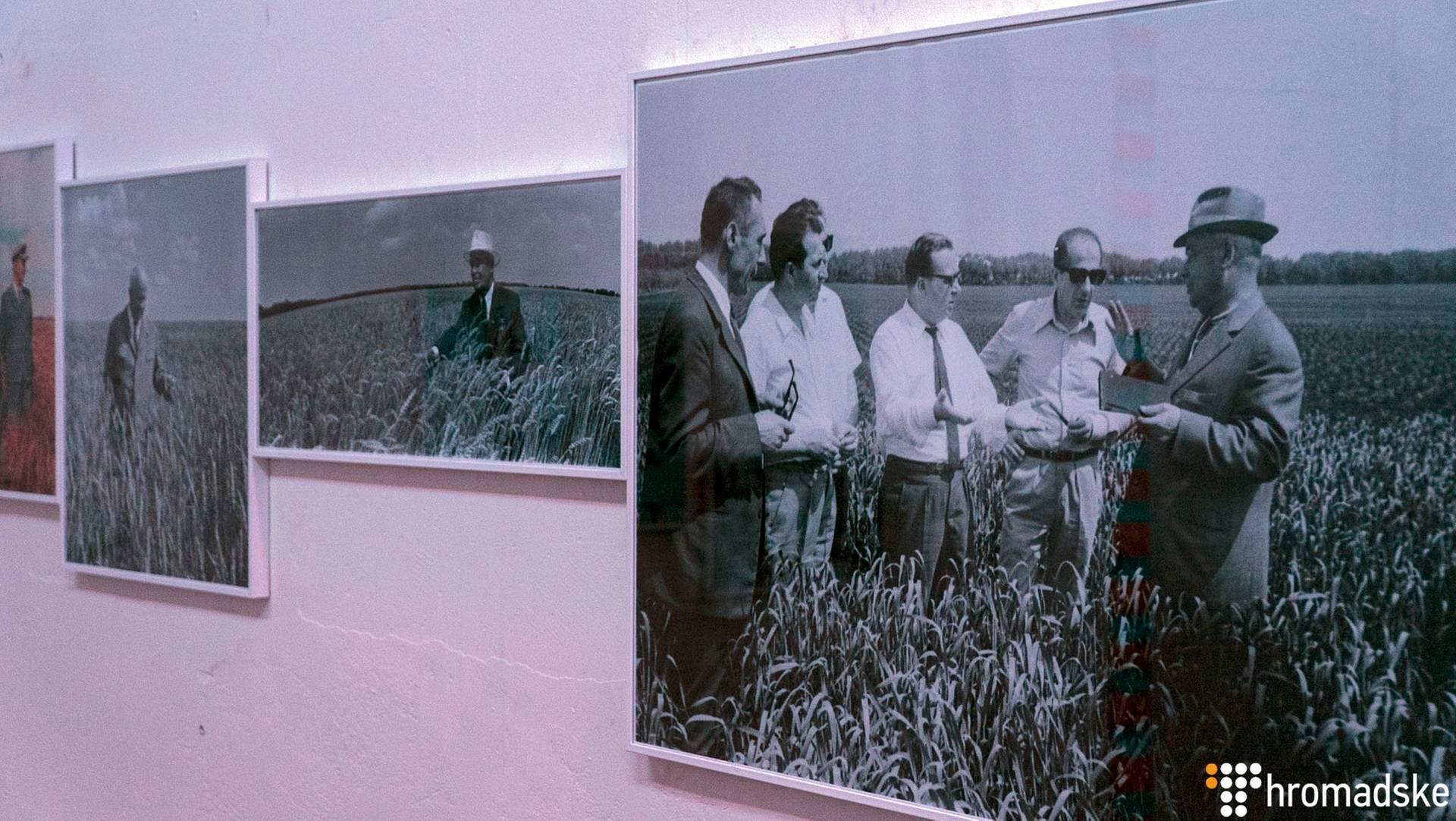 Микита Хрущов — перший секретар ЦК КПРС СРСР (1953-1964), на фото праворуч, під час огляду сільськогосподарських насаджень