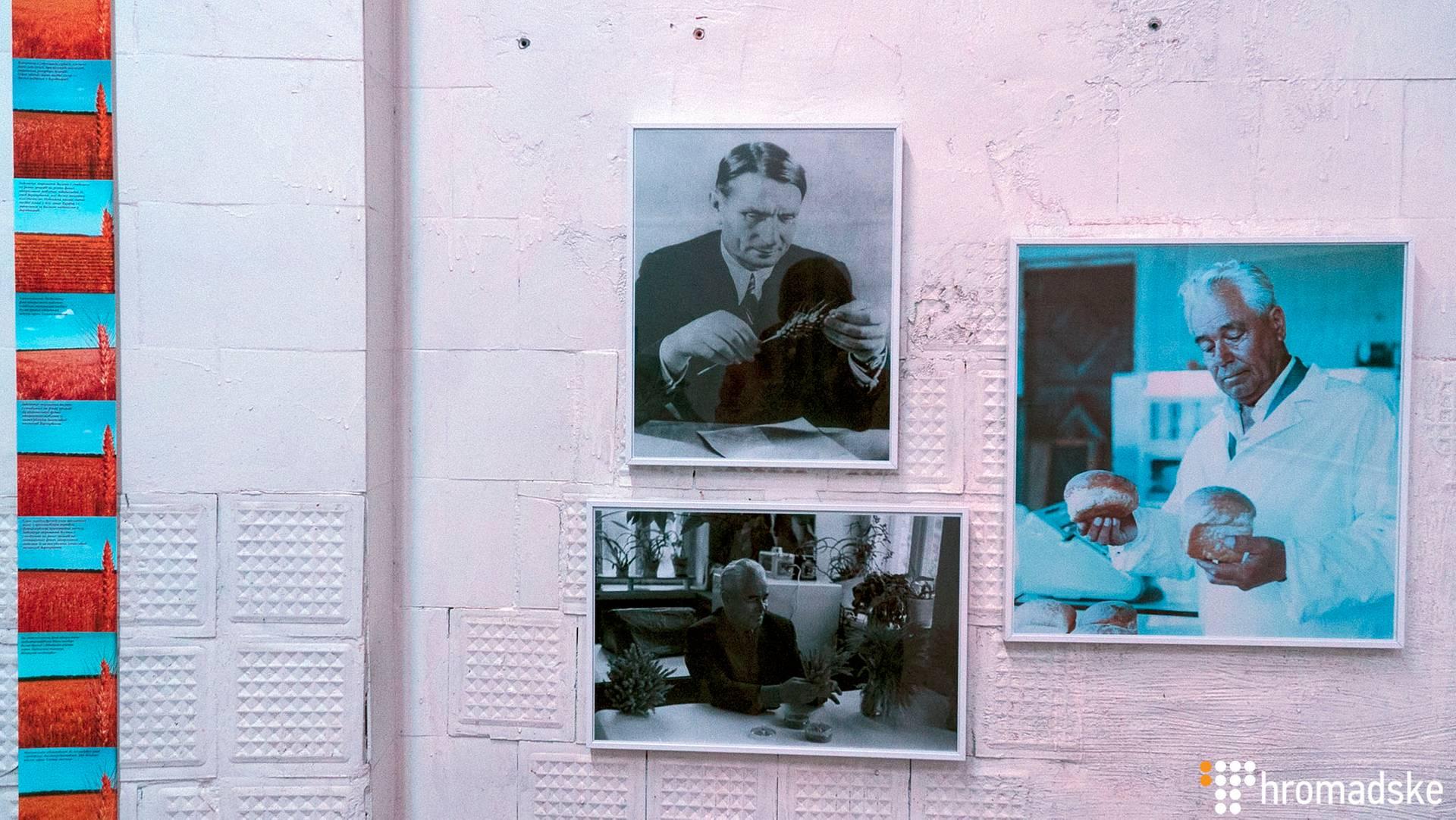 На фото зверху ліворуч — радянський агроном Трофима Лисенко, засновник псевдонаукового напрямку в біології — мічуринської агробіології, радянської кампанії проти генетики. На фото праворуч та ліворуч внизу – радянський вчений в галузі насінництва пшениці Василь Ремесло, який запровадив методику отримання високоврожайних сортів озимої пшениці з підвищеною стійкістю до екстремальних умов, а також створення пластичних зимостійких сортів озимої пшениці для її вирощування в нетрадиційних зонах