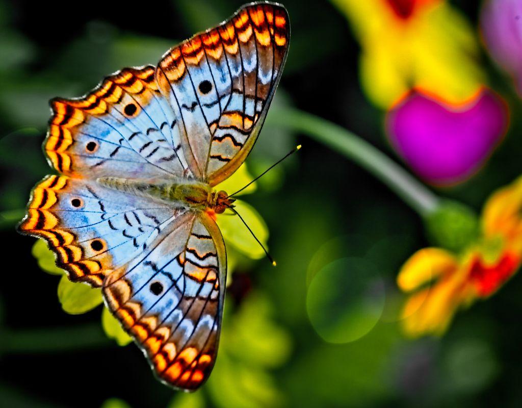 Freiwillige Helfer für den Schmetterlingsgarten