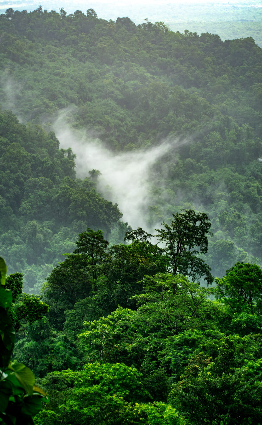 Support the protection of the Peruvian Amazon rainforest