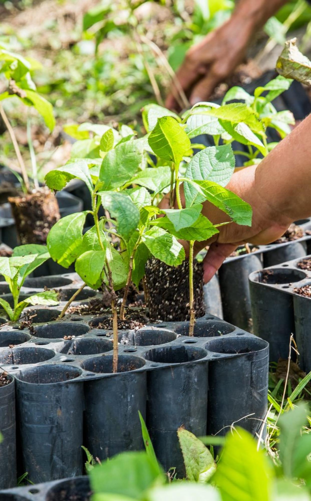 Plant a tree in Haiti