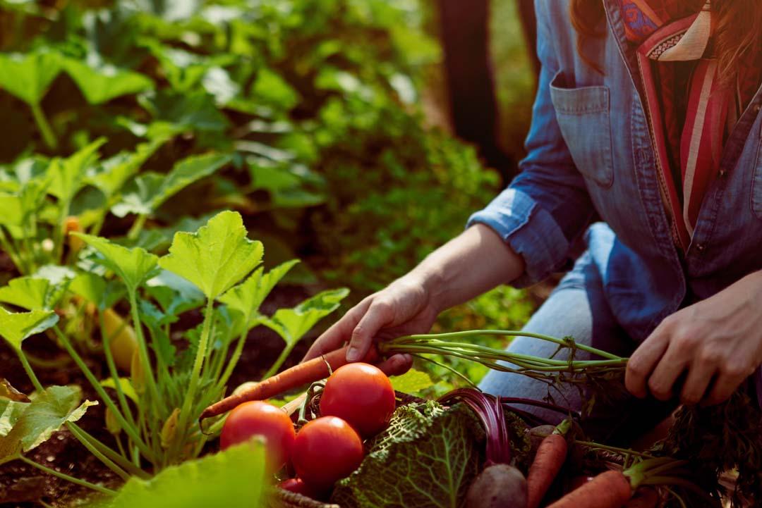 Phoenix: Generationsübergreifende Gartengestaltung