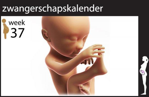 Afbeelding blog '37 weken zwanger'