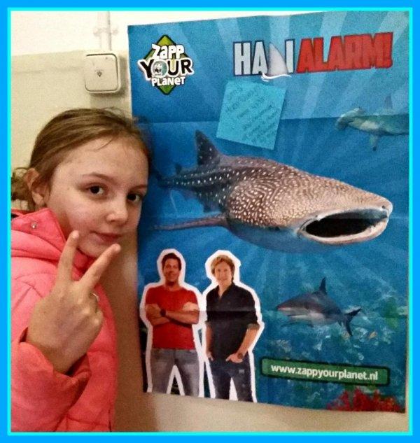 Afbeelding blog 'Haaialarm! Help de haai naar veilig water! '