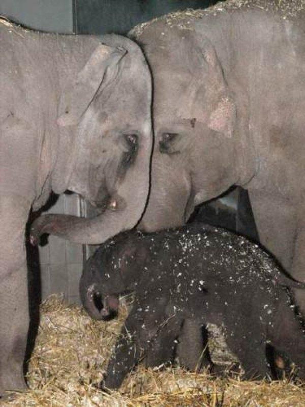 Afbeelding blog 'Dagje weg met kids? Artis heeft een babyolifantje!'