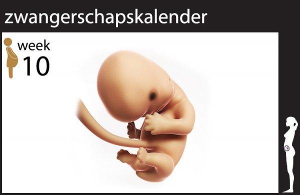 Afbeelding blog '10 weken zwanger'