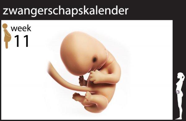 Afbeelding blog '11 weken zwanger'