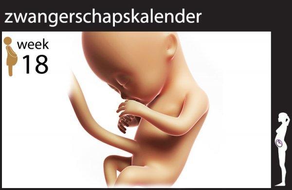 Afbeelding blog '18 weken zwanger'
