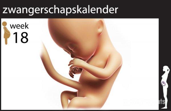 week 18 zwangerschap
