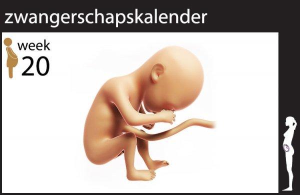 Afbeelding blog '20 weken zwanger'