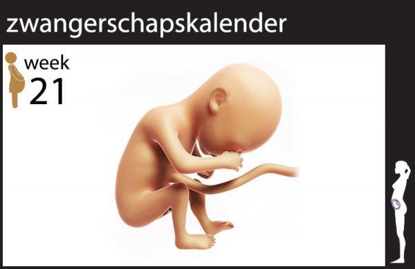 Afbeelding blog '21 weken zwanger'