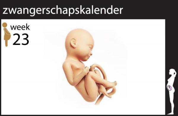 Afbeelding blog '23 weken zwanger'
