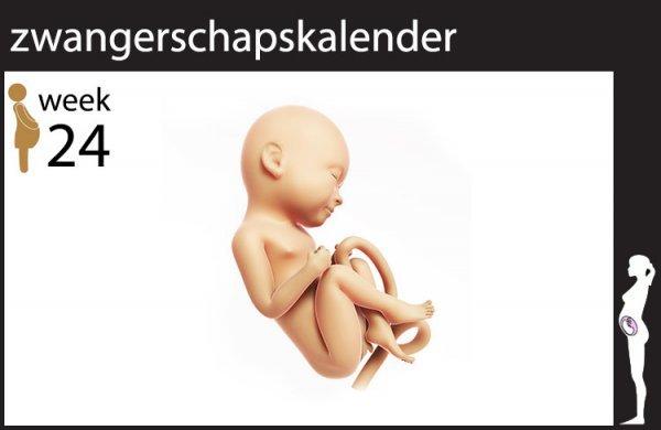 24 weken zwanger | Week 24 zwangerschap | Mamaplaats