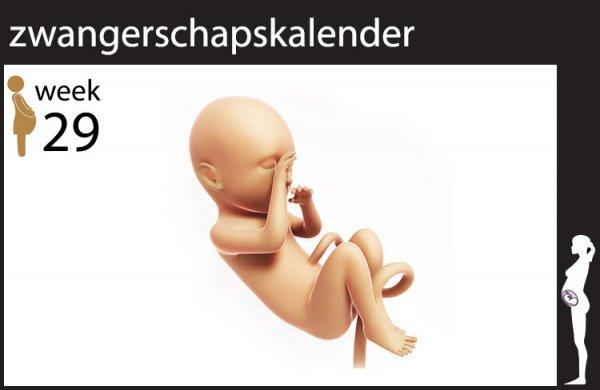 Afbeelding blog '29 weken zwanger'