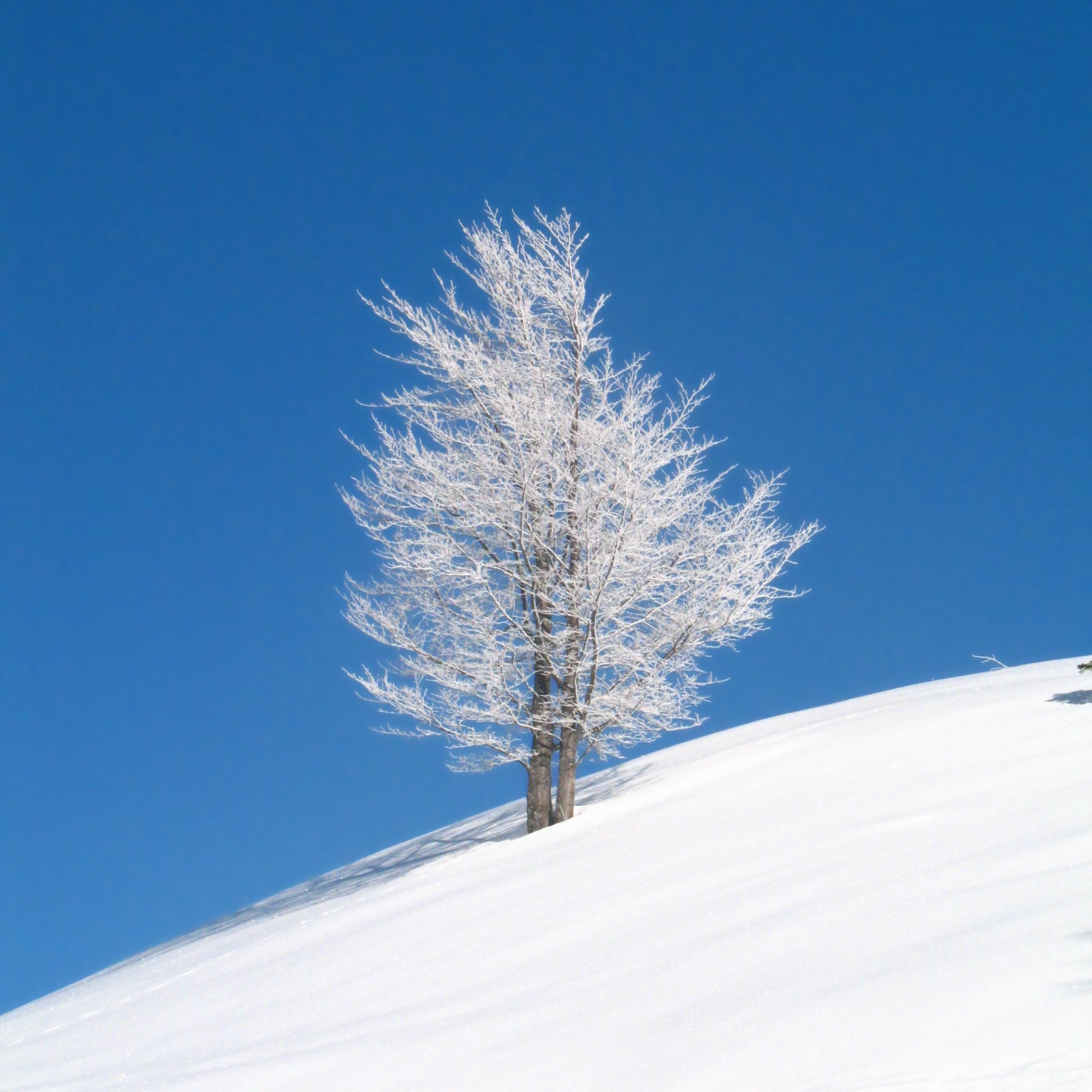 La bellezza della neve