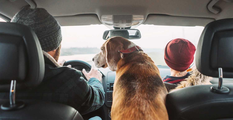 Gebrauchtwagen für Hund und Auto