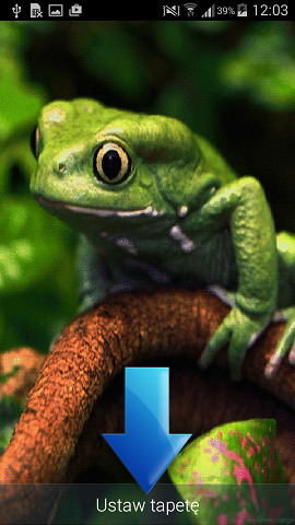 Frog Live Wallpaper app wallpaper preview screen