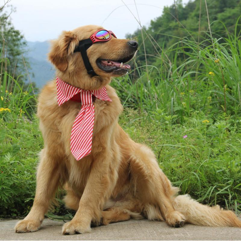 Полосы большой собаки щенки галстуков регулируемый Стрижка галстуки де ла бедуайер к собаки и щенки энциклопедия для детей
