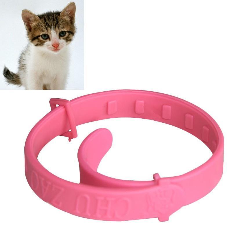 cat front paw bent