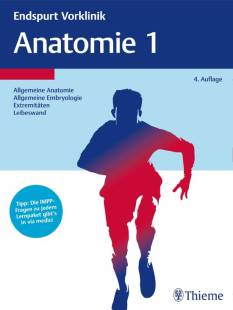endspurt vorklinik anatomie 1 pdf