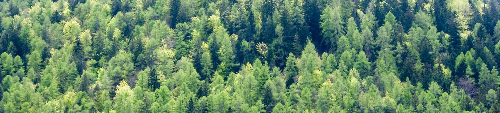 Karttaselain ja paikannin mukana metsällä