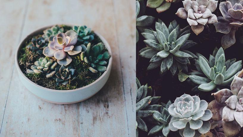 5 ideas para decorar tu casa con plantas y 2 libros maravillosos